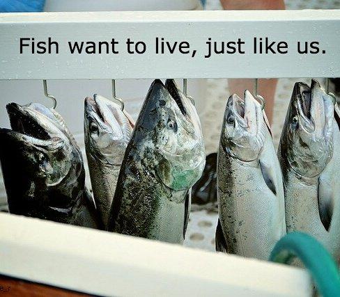fishfeel