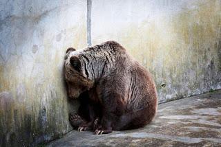 BearZoo